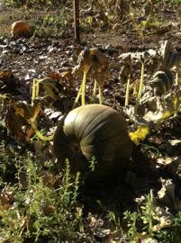 outdoor education, fall garden, composting