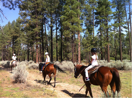 idyllwild summer camp, outdoor education, equine program, science camp