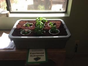 Experimental hydroponics in our office lobby.