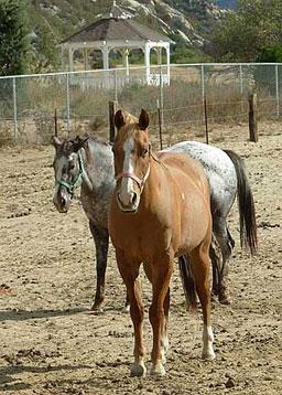 Pathfinder Horse Shelter